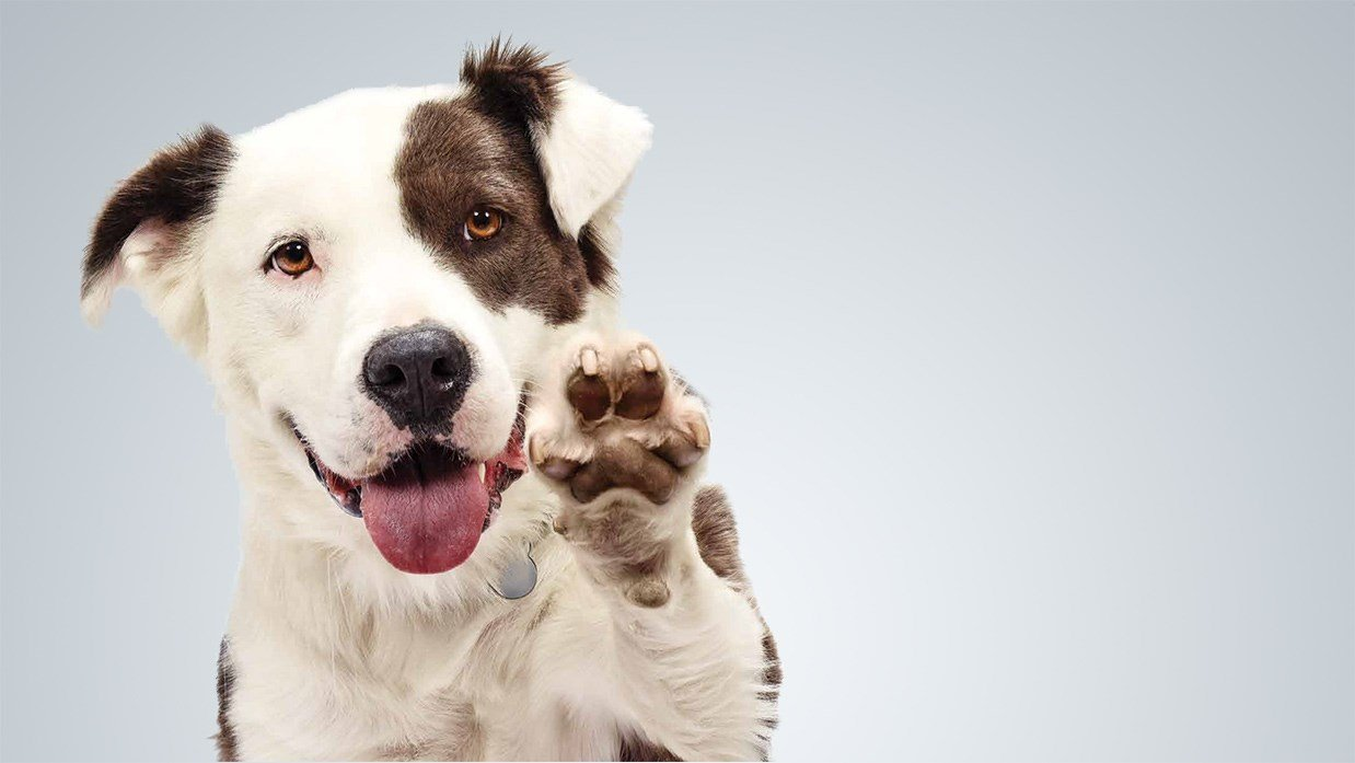 Visit the Palm Springs Animal Shelter and the Riverside County Animal Shelter in Thousand Palms to adopt!