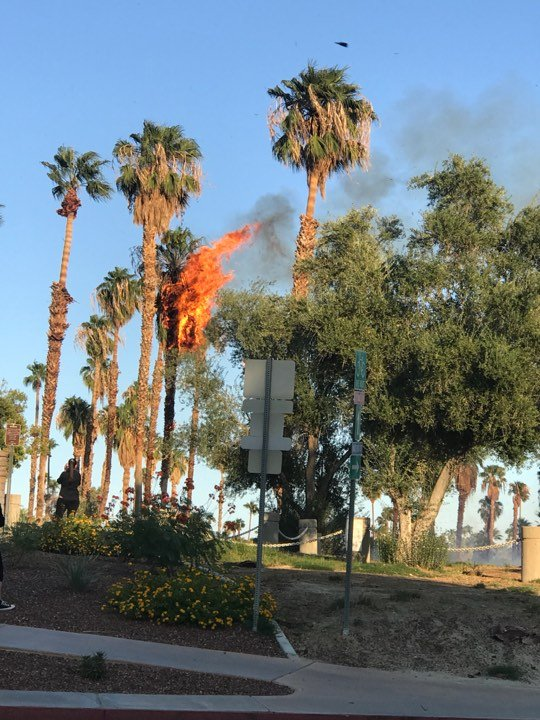 Several trees catch fire neat the S. Farrell Drive in Palm Springs.