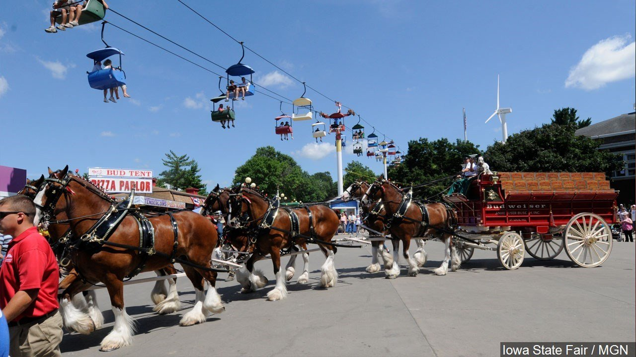 Budweiser Clydesdales to Parade Through El Paseo - Palm Springs News, Weather, Traffic, Breaking ...