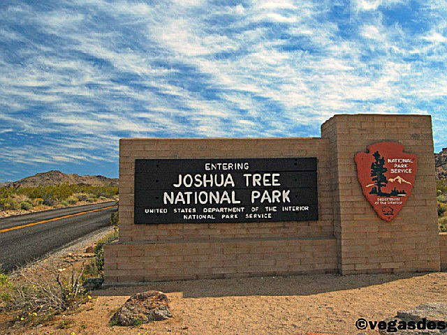 Joshua Tree Temporarily Closes Hiking Trail Due to Extreme Heat - Palm Springs News, Weather ...