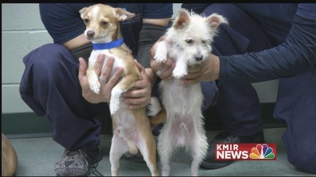 Adopt a pet at quot the clear the shelter quot event this weekend kmir news